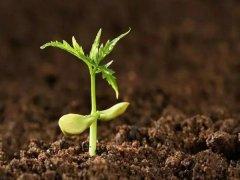 土壤养分检测仪厂家哪家好?