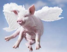 如何在屠宰环节做好非洲猪瘟的检测工作?